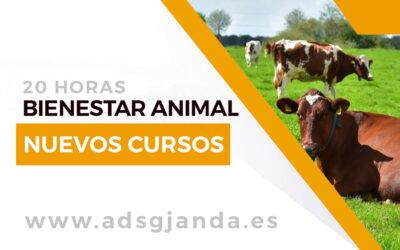 Próximos cursos de Bienestar animal en explotaciones y en el transporte